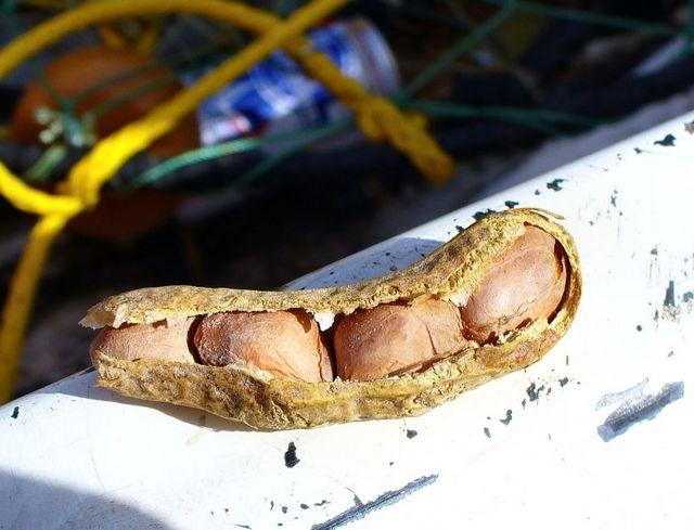 Amazing Four Nut Goober Image Found!