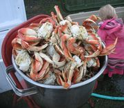 Bucket Of Dungeness