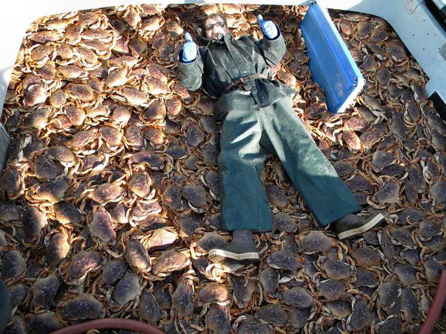 Dungeness Season 2009-2010 So many Crab