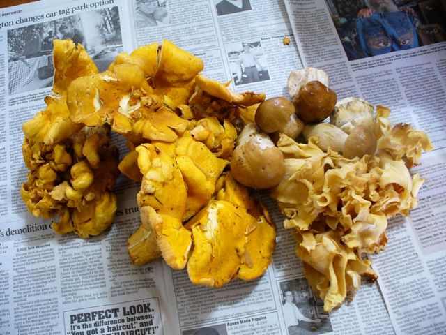 king bolete, 'flowering' chanterelle & cauliflower