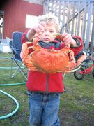 Tucker and A Dungeness at the Crab Cookup