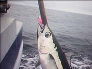 Albacore Tuna Aug 2009 Video Thumb