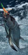 tuna on the line